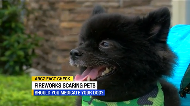 Is medicating your pets for the Fourth of July a good or bad idea? - ABC7 News