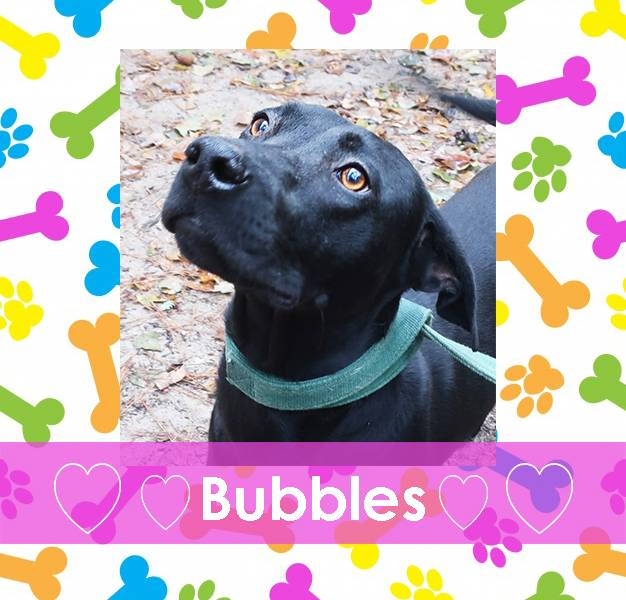 Adoptable Pet of the Week: Bubbles - All On Georgia