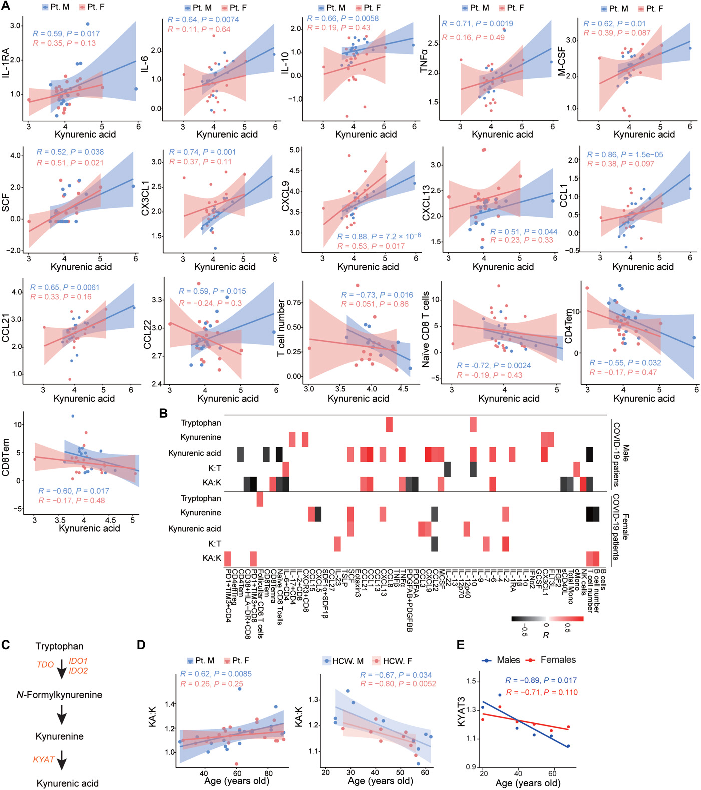 Kynurenic acid may underlie sex-specific immune responses to COVID-19 - Science