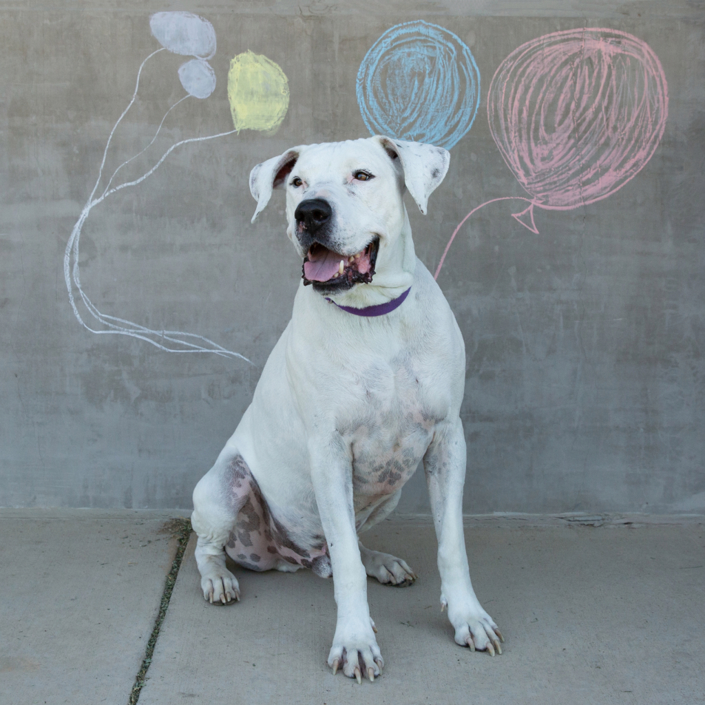 Longmont Humane Society pet of the week for June 19, 2021 - Longmont Times-Call